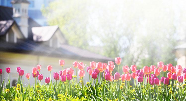 Flowers Growing Showing Springtime Blooming.